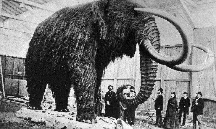 Mastodon Social